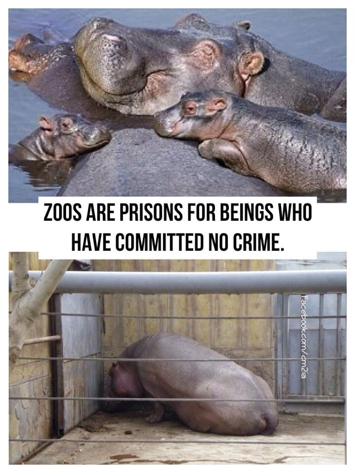 zoos animals prisons People for the ethical treatment of animals (peta) is a prominent trumpeter of these beliefs, arguing that zoos are pitiful prisons peta and those against zoos often reach the stark, candid conclusion that animals in zoos suffer.