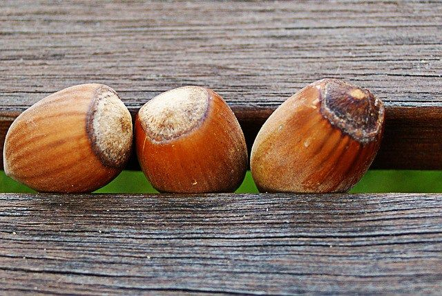 How Many Hazelnuts a Day Should You Eat To Get Significant Health Benefits?