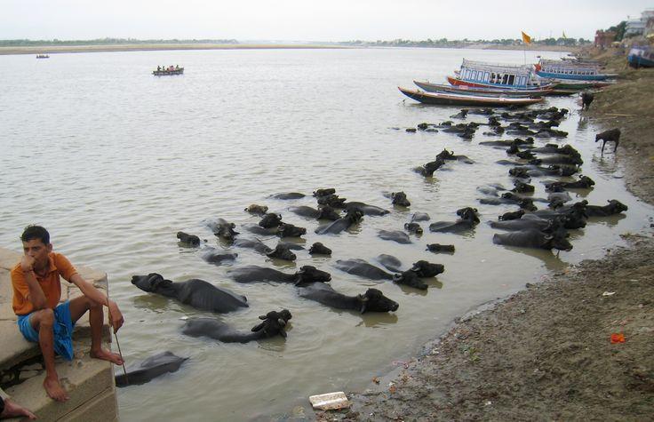 Baño sagrado en Benarés