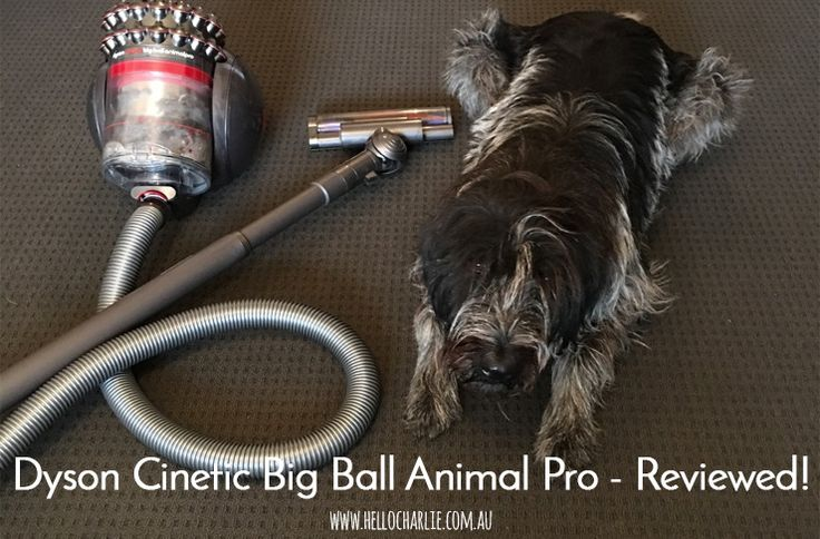 dyson cinetic big ball animal pro review animals. Black Bedroom Furniture Sets. Home Design Ideas