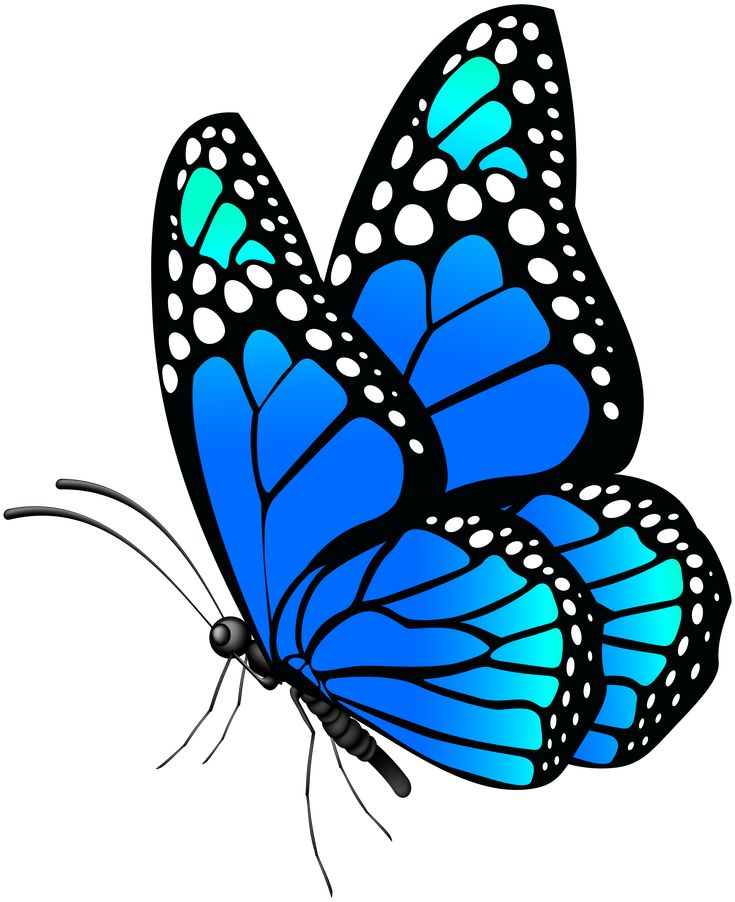 Butterfly Blue Png Clip Art Image Gallery Yopriceville High Quality Images And Transparent Butterfly Art Drawing Butterfly Art Painting Butterfly Painting
