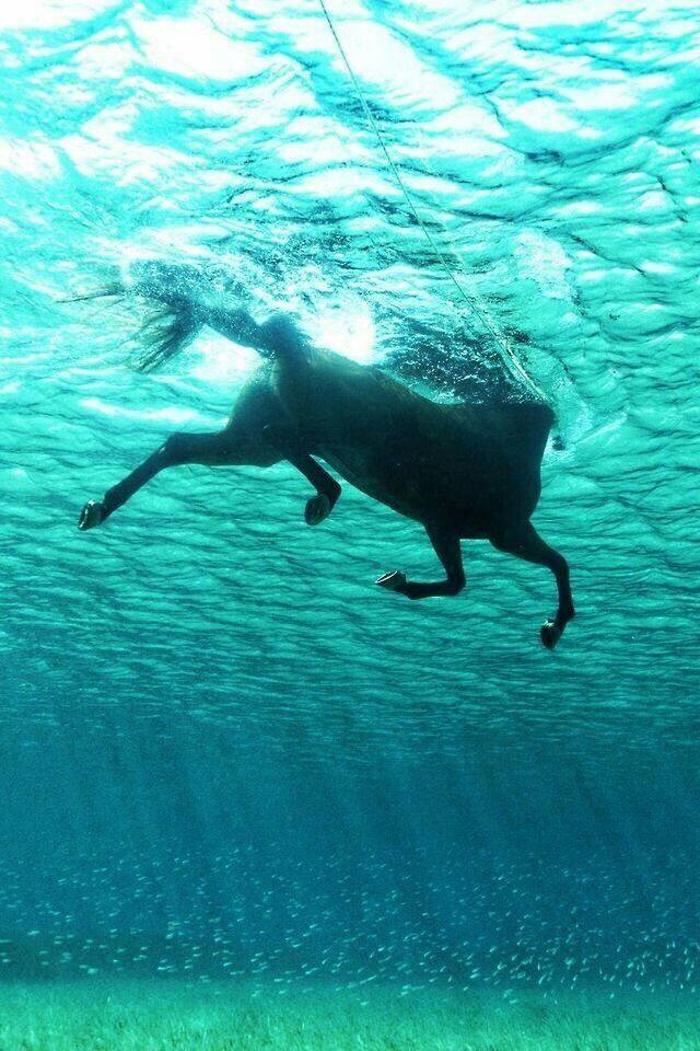 I would swim with my horse when growing up on the farm... I would ride him into the water & off we would go... always a great time! <3