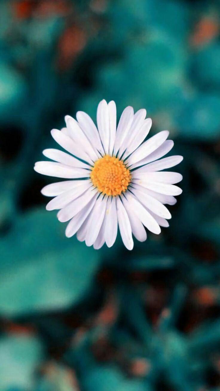 Natural Flor Branca