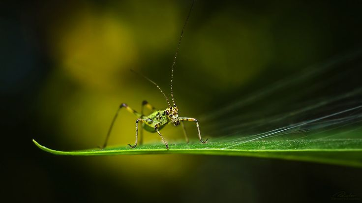 Dancing bug by András Pásztor on 500px