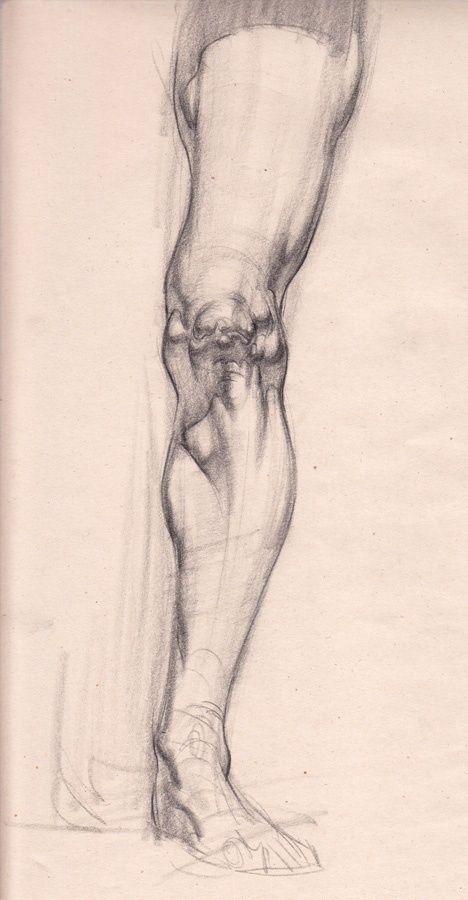DaVinci ho extraña colección de arte de línea de boceto (Fig. 88) _ pétalo ilustración / cómic