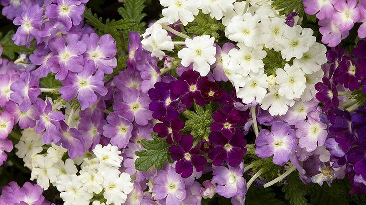 2015 legdivatosabb virágai teraszra és kertbe  http://www.nlcafe.hu/otthon/20150406/2015-viragok-teraszra-kertbe/