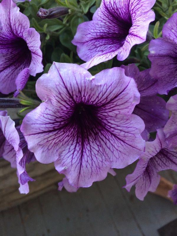Free Plant Identification Blooming Plants Hanging Plants Plants
