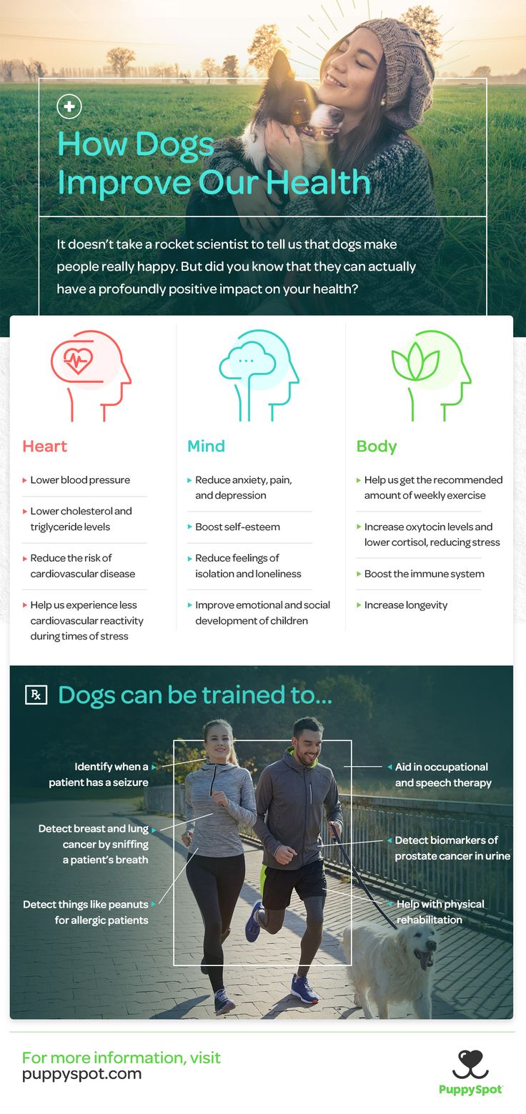 Dogs are healthy for us in more ways than you know. How dogs improve our health infographic, | dogs | pets | dog lover | health and wellness | self improvement | live better | healthy living | self help | dog information | dog inforgraphic