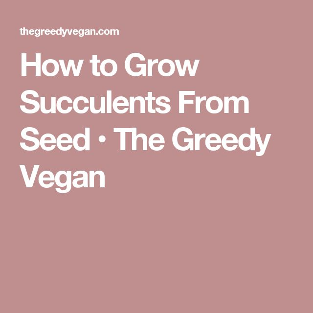 How to Grow Succulents From Seed • The Greedy Vegan