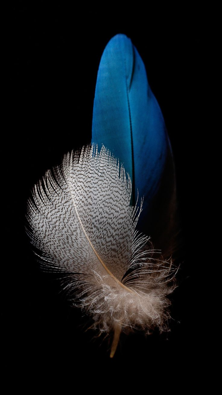 17 Best Ideas About Fondos De Plumas On Pinterest Plumas