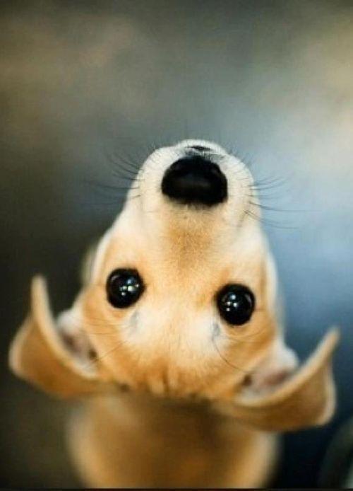 Model-Hund | Smini
