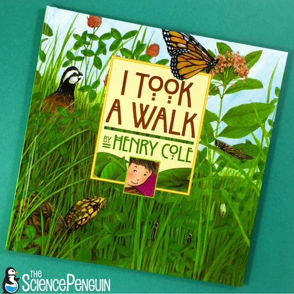 Take a walk! Here's a book to introduce Nature Walks to kindergarten and first grade students.  Enjoy a free printable on living and nonliving things to provide focus for your nature walk.