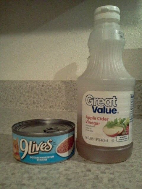 Best 25 Urinary Tract Infection Ideas On Pinterest Cure