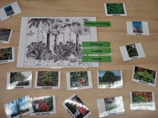 5de leerjaar De Wimpel 2013-2014: Hoekenwerk 'het bos' (groep 1)