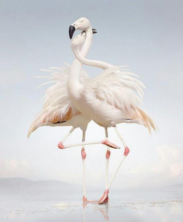 Mejores 138 imágenes de Birds en Pinterest   Pájaros bonitos ...
