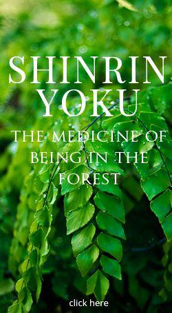 Shinrin-Yoku: Forest Bathing – #HikeSonomaCounty