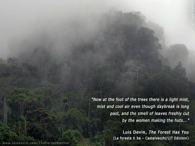 Baka Pygmies - Rainforest Fog