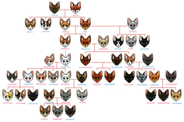 The Official Canon Warriors Cat Family Tree As Of A