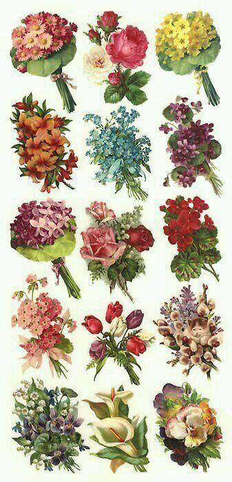 Láminas de cromos troquelados- Flores