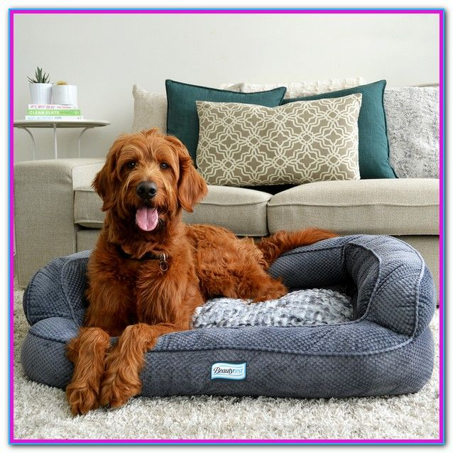 How To Wash Beautyrest Dog Bed How To Clean A Dog Bed That Doesn T Have A Removable Cover Header Clean A Dog Bed Prop Memory Foam Dog Bed Dog Bed Dog Sofa