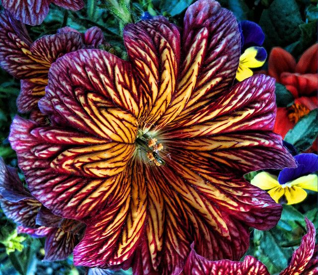 "Exquisite Trumpet Flower ""Simply amazing colors, never seen a flower quite like"