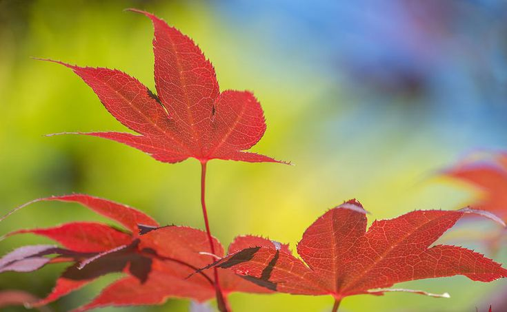 Autumn Colours by Racheal Christian #photography - To buy visit http://racheal-christian.pixels.com/featured/autumn-colours-racheal-christian.html