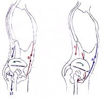 Fisioterapia e salute: Perché addominali tonici prevengono la lombalgia.