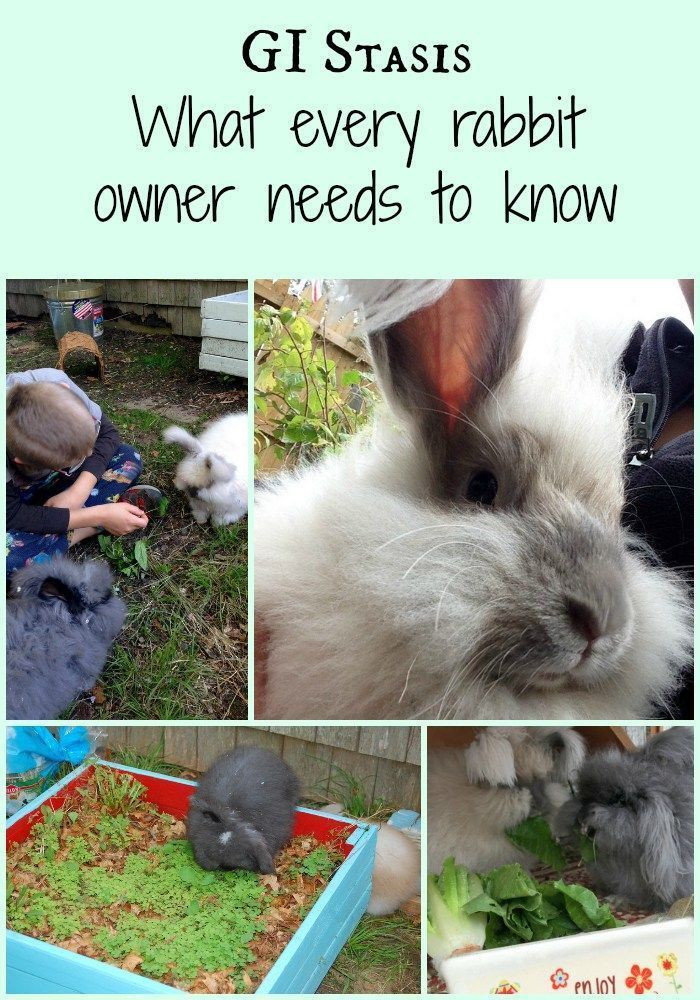 GI Stasis can be a deadly condition. Find out the signs to watch for and how to keep your bunny healthy!