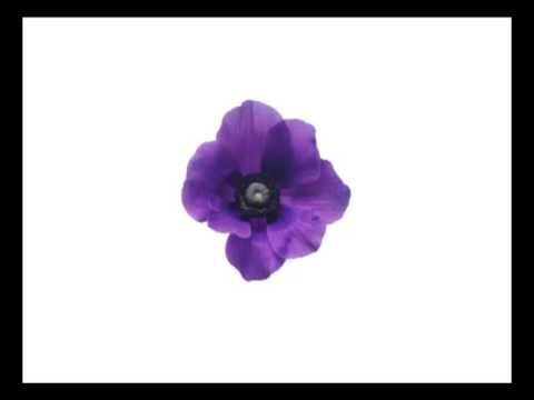 Bits de flores en español