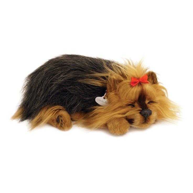 Yorkie Uyuyan Köpek   Perfect Petzzz  Tıpkı gerçek gibi...  Sevimli yavru köpek tıpkı gerçek bir köpek gibi nefes alıp veriyor ve yumuşak yatağında usluca uyumaya devam ediyor. Arada sırada fırçası ile onu taramanız yeterli.  Uyku minderi, isimlikli tasması, fırça, evlat edinme sertifikası kutusunda yer alıyor.   1 adet D alkalin pil ile yaklaşık dört ay çalışır. (Pil dahildir)  ASTM Uluslararası F 963 ve CPSIA Oyuncak Güvenlik Gereksinimleri'ne uygun olarak üretilmiştir.