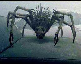 THE MIST Movie Creatures!!!