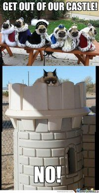 Grumpy Cat takes over the pugs' castle