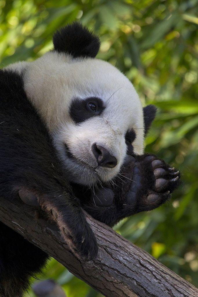 llbwwb:   (by Official San Diego Zoo)