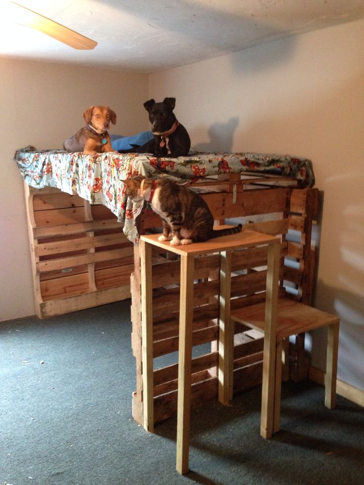 Took 6 pallets and made a dog bunk bed! Pet ideas