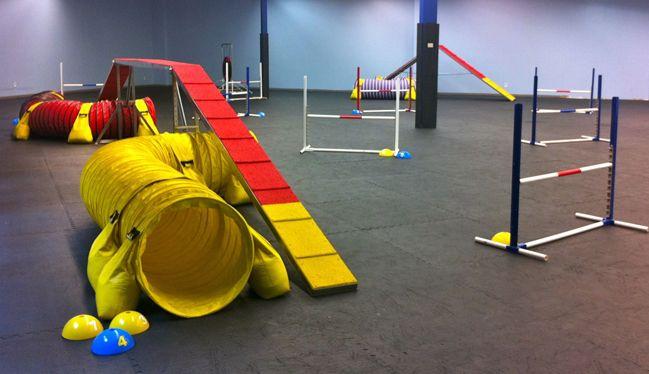 Indoor Dog Agility Training AZ | Indoor Dog Park | Mesa Arizona ...