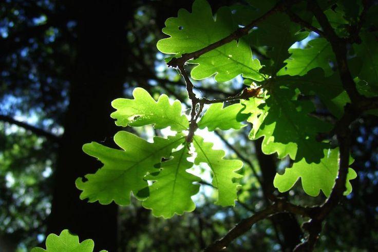 Les 25 meilleures id es concernant photosynth se sur pinterest la science des plantes - Pourquoi un coup de soleil gratte ...