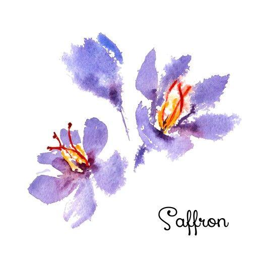 Saffron watercolor