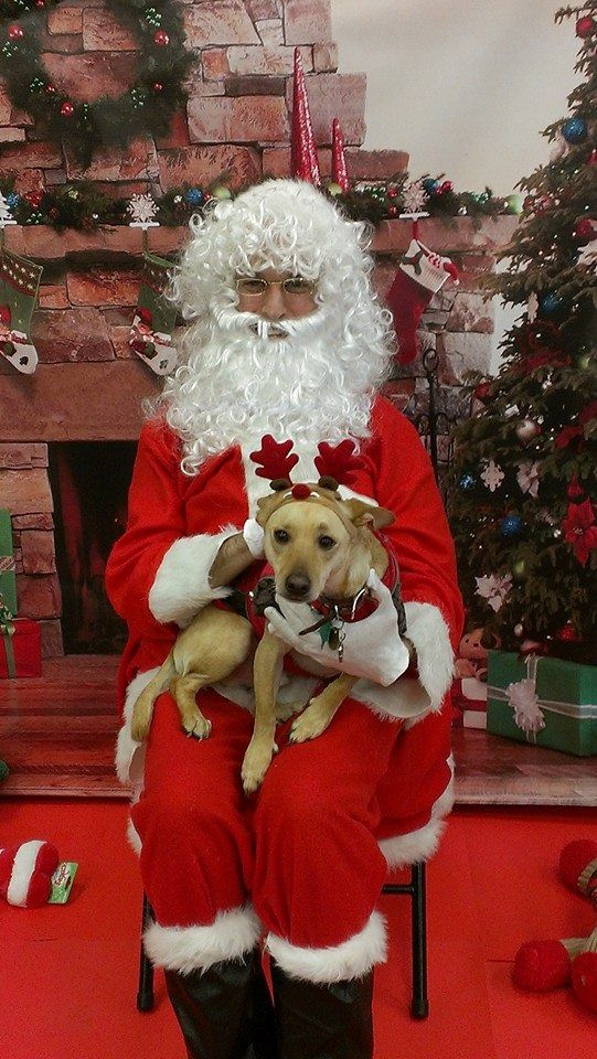 Tiffany's adorable dog/reindeer with Santa at our La Habra location.