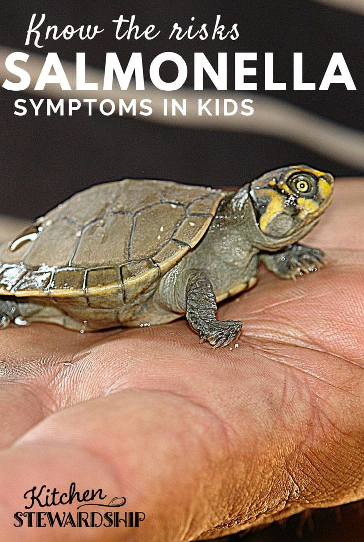 Do you Understand the Risks - Turtles, Salmonella and Young Children. Make sure you know the symptoms.