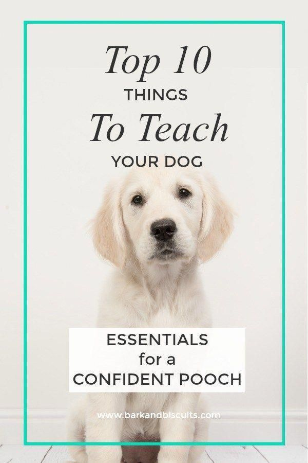 Top 10 Things To Teach Your Dog Training Your Dog Dog Training
