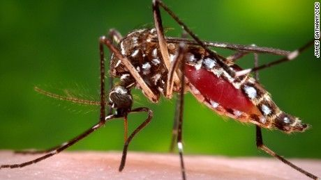 The mosquito-borne Zika virus has spread to Puerto Rico, leading to travel warnings for tourists, especially pregnant women.