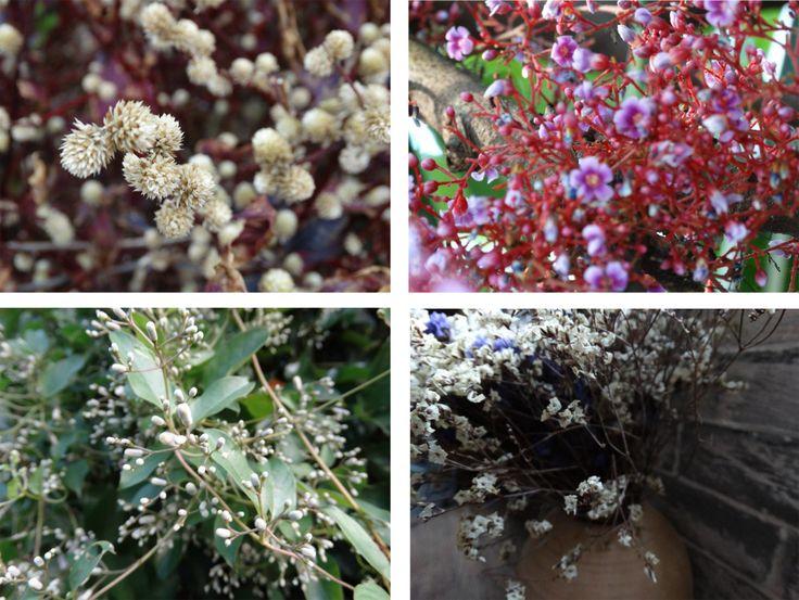 Красота цветов в сочетании с восточной поэзией дарят эстетическое удовольствие!