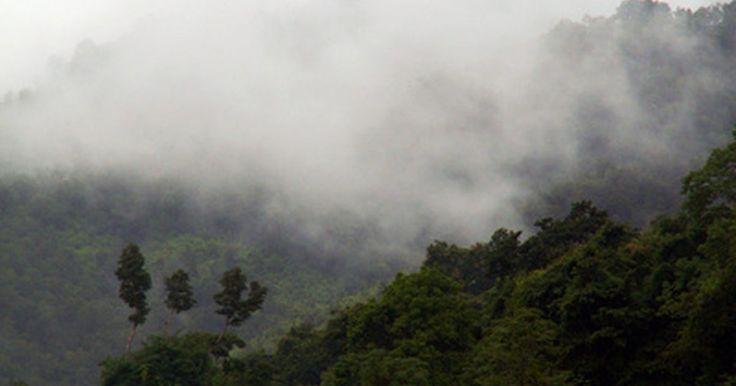 Plantas nativas de la selva tropical. La selva tropical es el hábitat natural de más de la mitad de las plantas y especies animales del mundo. Debido a la gran cantidad de árboles y otras plantas de la selva tropical, esta región proporciona alrededor del 40 por ciento del suministro de oxígeno de la tierra. El bosque tropical es cálido y húmedo durante todo el año, con una humedad ...
