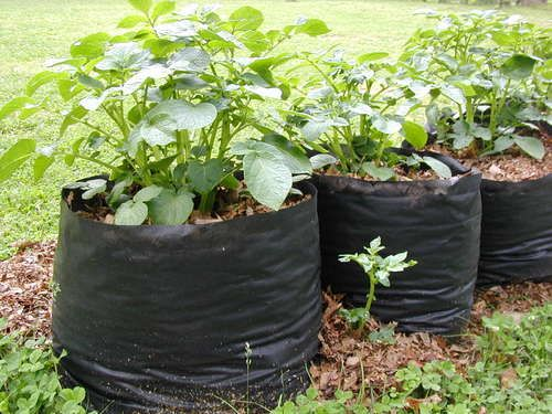 Grow bags sewn from landscape fabric!  (Use nylon thread.)  Any veggies, or potatoes.