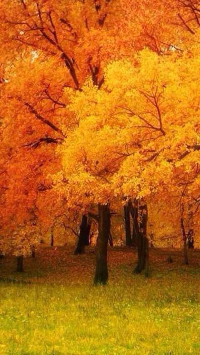 Pin By Galina Sysun On O. Autumn. Осінь