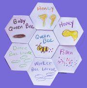 honeycomb shape book