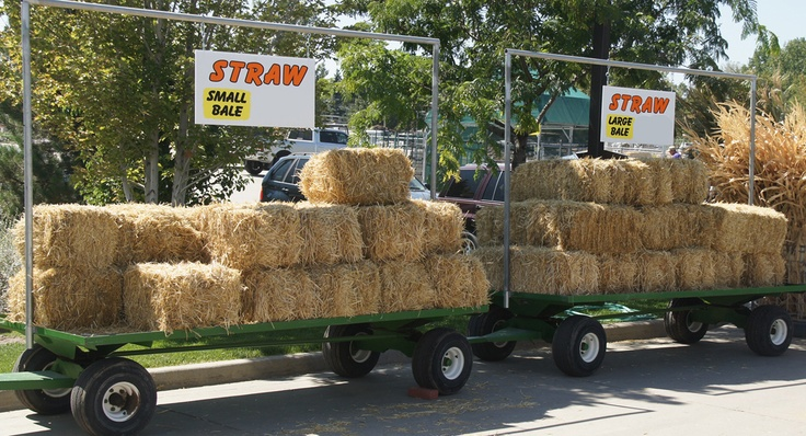Large and small straw bales for sale.  good idea to put them out and on wheels to take in out of rain