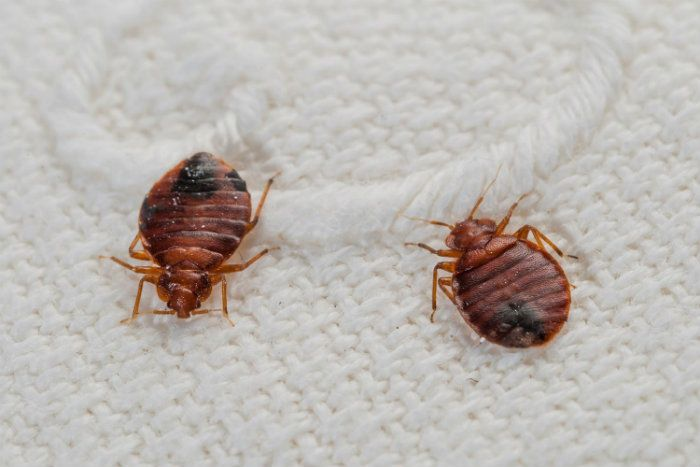 Πως να εξοντώσεις εύκολα και γρήγορα τα μυρμήγκια στο σπίτι σου!  #tips #ιδέες #καθαριοτητα #καθαριοτητακουζινας #μυρμηγκια #μυρμηγκιαμεφτερα #μυρμηγκιαστηνκουζινα #μυρμηγκιαστιςγλαστρες #μυρμηγκιαστοσπιτι #μυρμηγκιαφαγητο #οργανωση #φαρμακογιαμυρμηγκιαστοσπιτι