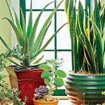 24 of the Easiest Houseplants You Can Grow