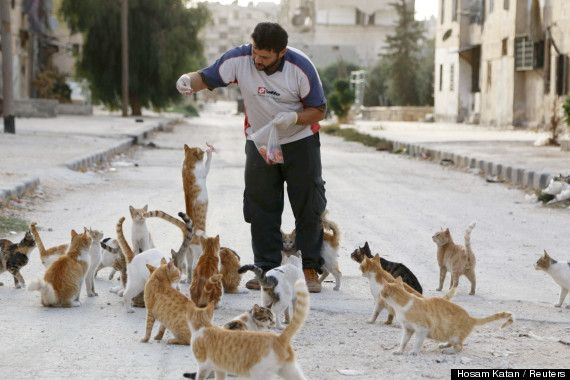aleppo cats 1  http://www.huffingtonpost.com/2014/10/01/man-feeds-stray-cats-in-syria_n_5902900.html
